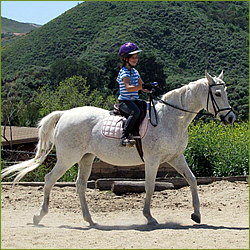 Neophyte Farms Horseback Riding