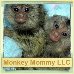 Monkey Mommy LLC